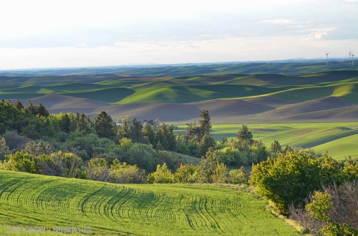 Springtime from Steptoe Butte
