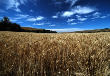 Palouse bounty