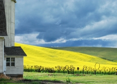 Dahmen Barn and Canola