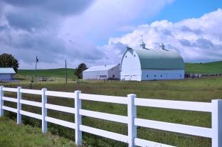 Daily Barn