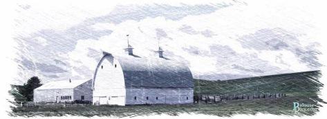 "Daily Barn - ""Sketch"""